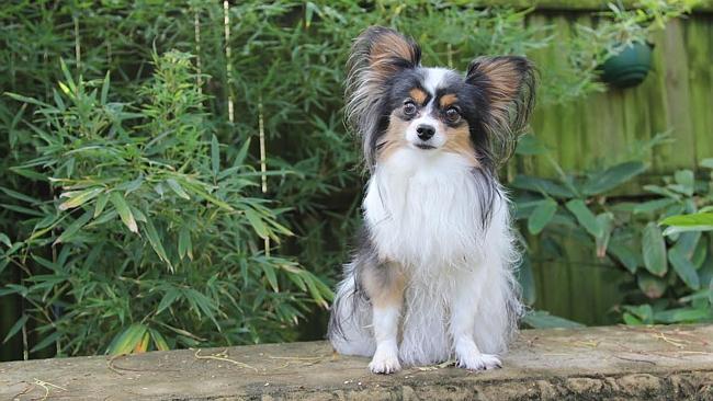 เจ้า Prinni สุนัขที่ถูกหมอทำร้ายร่างกายปางตาย