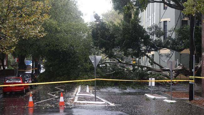 ภาพต้นไม้ล้มขวางถนนที่ย่าน Camperdown พื้นที่ตอนในของตัวเมืองซิดนีย์