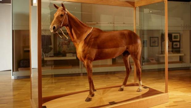 หุ่นสตาฟของ Phar Lap ในพิพิธภัณฑ์เมลเบิร์น