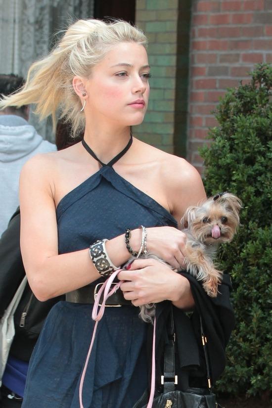 Amber Heard อุ้มสุนัขหนึ่งในสองตัวของเธอที่นิวยอร์กเป็นตัวเดียวกับที่นำมาเลี้ยงที่โกลด์โคสต์
