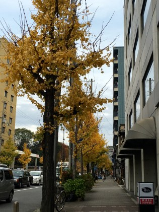 Yellow tree very pretty