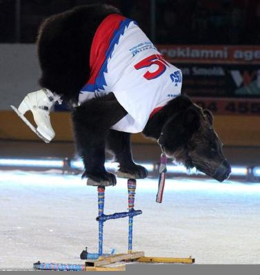 bears-forced-to-ice-skate-2