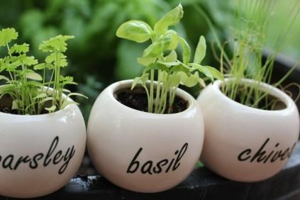 jinn-in-a-bottle-herbs