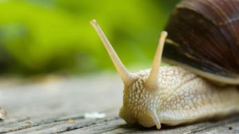jinn-in-a-bottle-snail-web