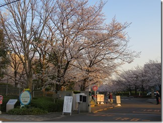 JT-sakuranotoorinuke-2018 (1)