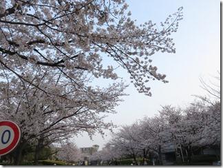 JT-sakuranotoorinuke2019-04-06 (2)