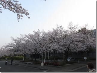 JT-sakuranotoorinuke2019-04-06 (3)