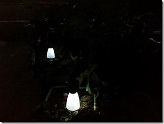 Solar-Light-CANDo (12)