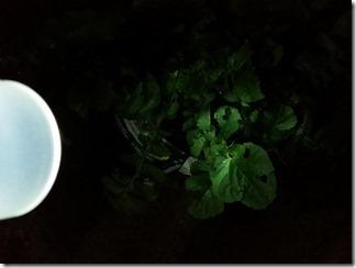 Solar-Light-CANDo (7)