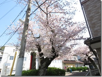 ikeda-sanpo (7)