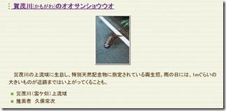 kumogahara-oomori (63)