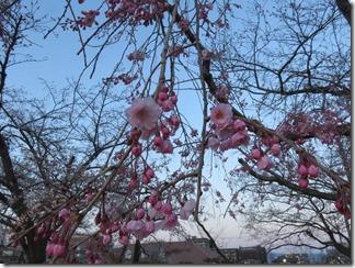 nagaokatenmanguu-sakura-raitoappu (21)
