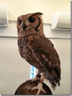 owl-cafe (11)
