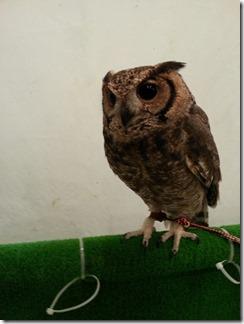owl-cafe (23)