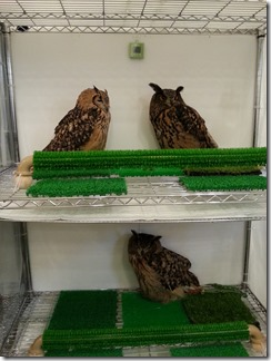 owl-cafe (24)