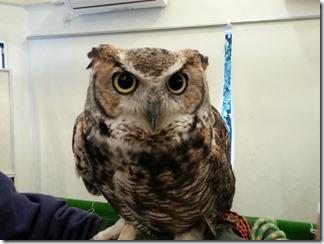 owl-cafe (36)
