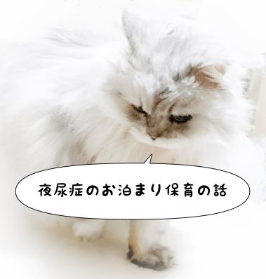 猫の写真と「夜尿症のお泊まり保育の話」