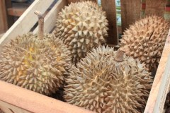 durian bohol bee farm