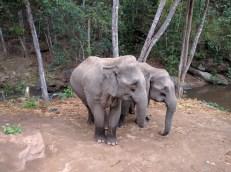 Elephants - obviously.