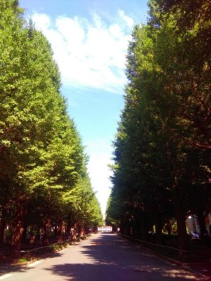 慶應大学の並木道