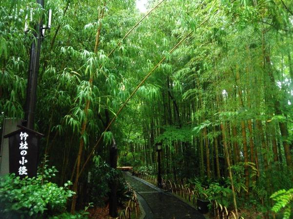 修善寺の竹林の小径