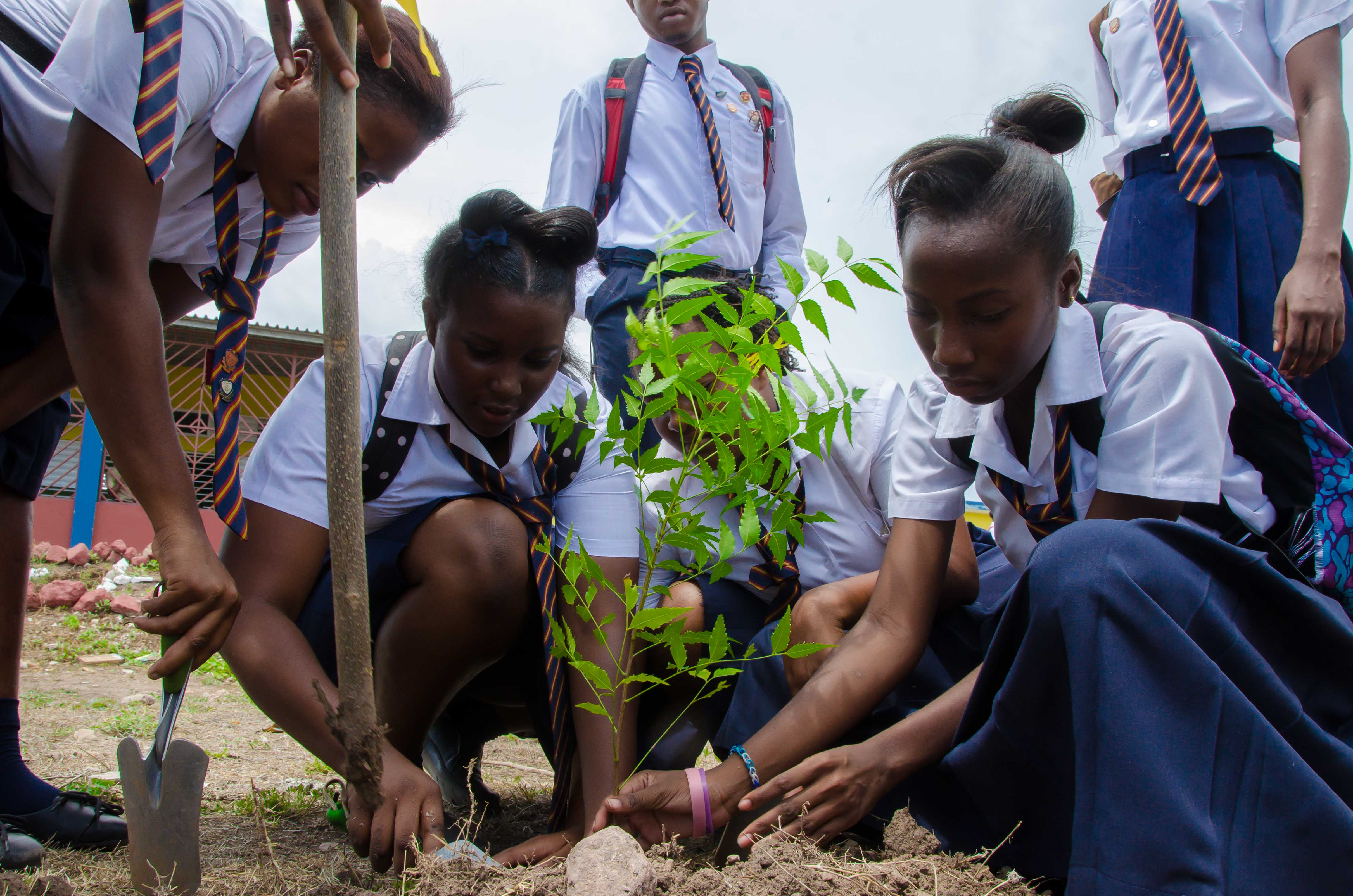Plant Trees To Reduce Effects Of Climate Change