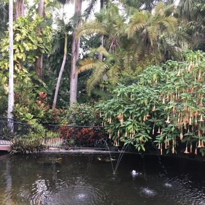 Tampa: Sunken Gardens