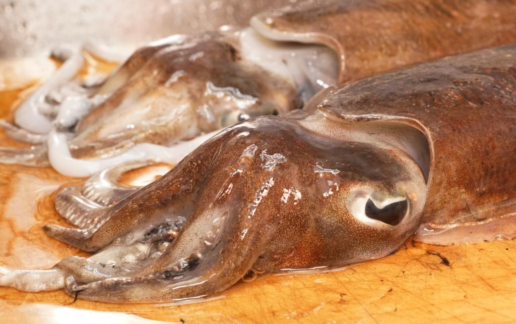 モンゴウイカの頭