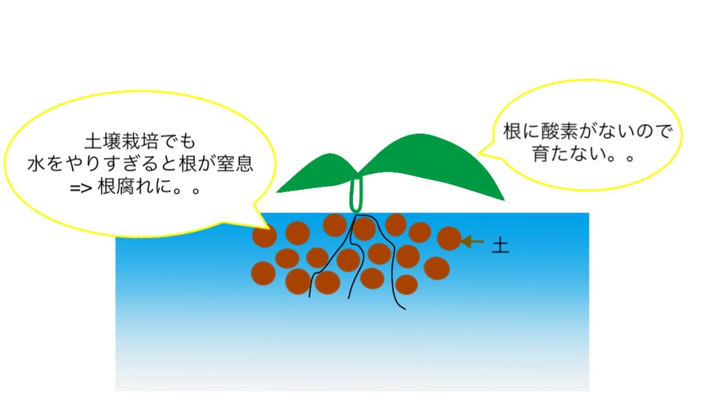 水のやりすぎで根腐れしてしまう原因について説明した画像