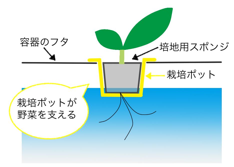水耕栽培用の栽培ポット受けのイメージ
