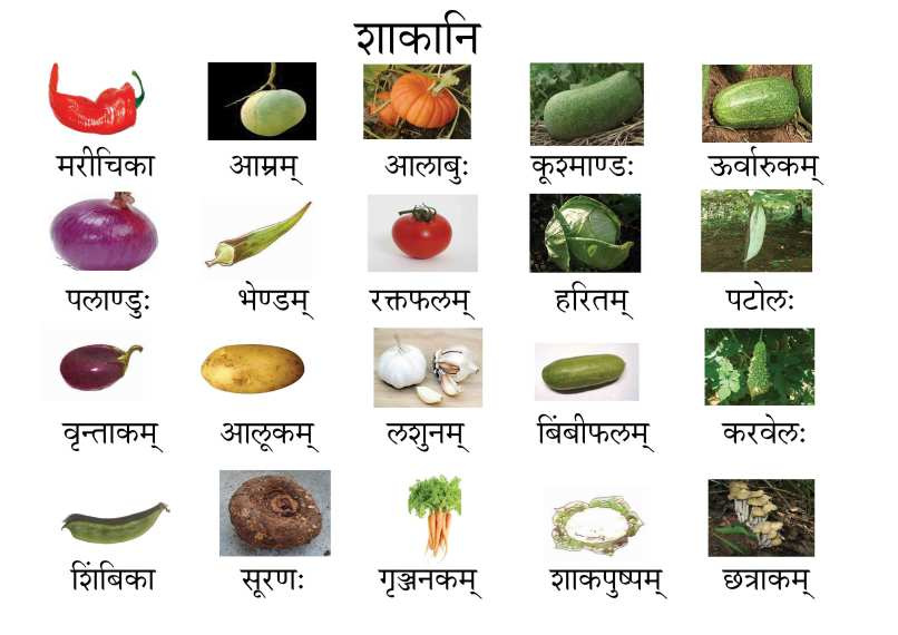 Pictures Of Flowers With Names In Hindi Wajiflower Co