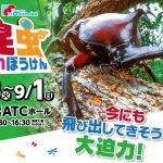 【関西・大阪】自由研究イベント情報 とびだせ!昆虫だいぼうけん(2019年度)
