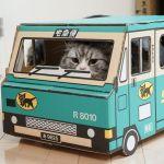 猫のしっぽがビクビク・ブルブル震えると病気って本当?人間のように寒いだけ?