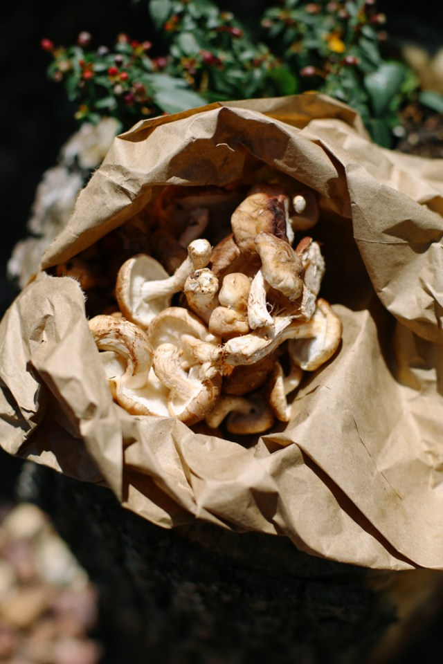 mushroom-log-1
