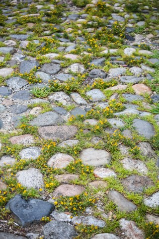 charleston-cobblestone-flowers-1