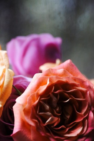 blurry-roses-1