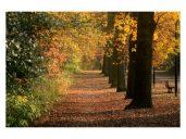 IMG_1873_2 Autumn 5