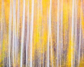 Gene Davis Aspens - Rio Grande National Forest, CO © jj raia