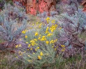 Wild Garden along the Colorado River near Moab, UT © jj raia