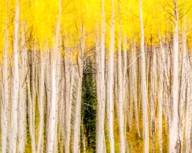 aspen blur — maroon bells wilderness, co © jj raia