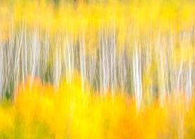 Aspen Grove Blur —McClure Pass, CO © jj raia