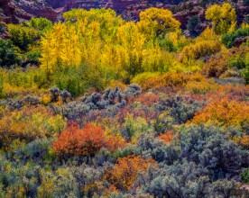 Autumn Color - Calf Creek Canyon - Grand Staircase NP, UT © jj raia
