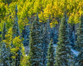 Autumn Frosting near Owl Pass - Uncompahgre National Forest, CO © jj raia