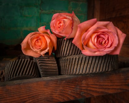Roses and Gears - Abandoned Textile Mill — © jj raia