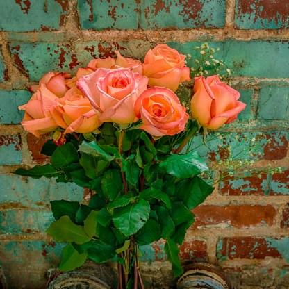 Roses No. 3 - Abandoned Textile Mille — © jj raia