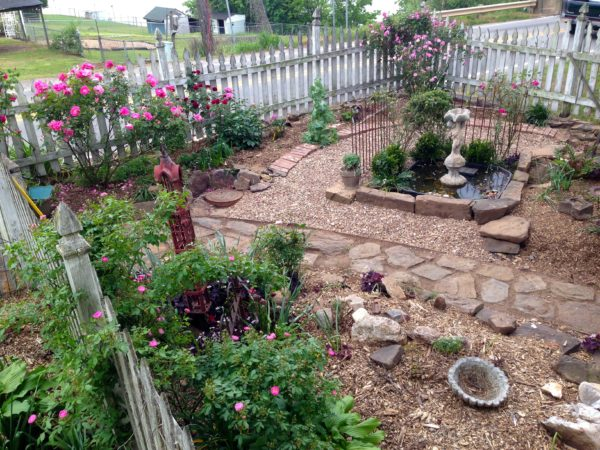 updated pea gravel path to fountain area and newly mulched beds. Old Blush, Arch Duke Charles, Carefree Beauty, and pink lemonade honeysuckle in bloom.