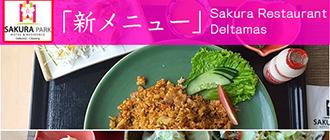 リーズナブルで美味しい〜「日替わりランチ」Sakura
