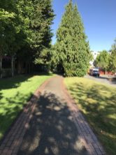 After passing my former health club's apartment replacement I turn onto this really nice walking path.