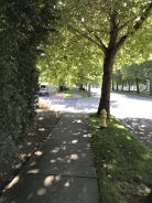 This is a fairly busy street but it has beautiful shade trees.