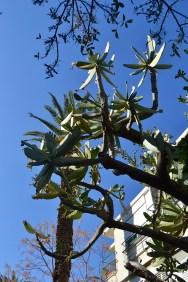 Unknown tree
